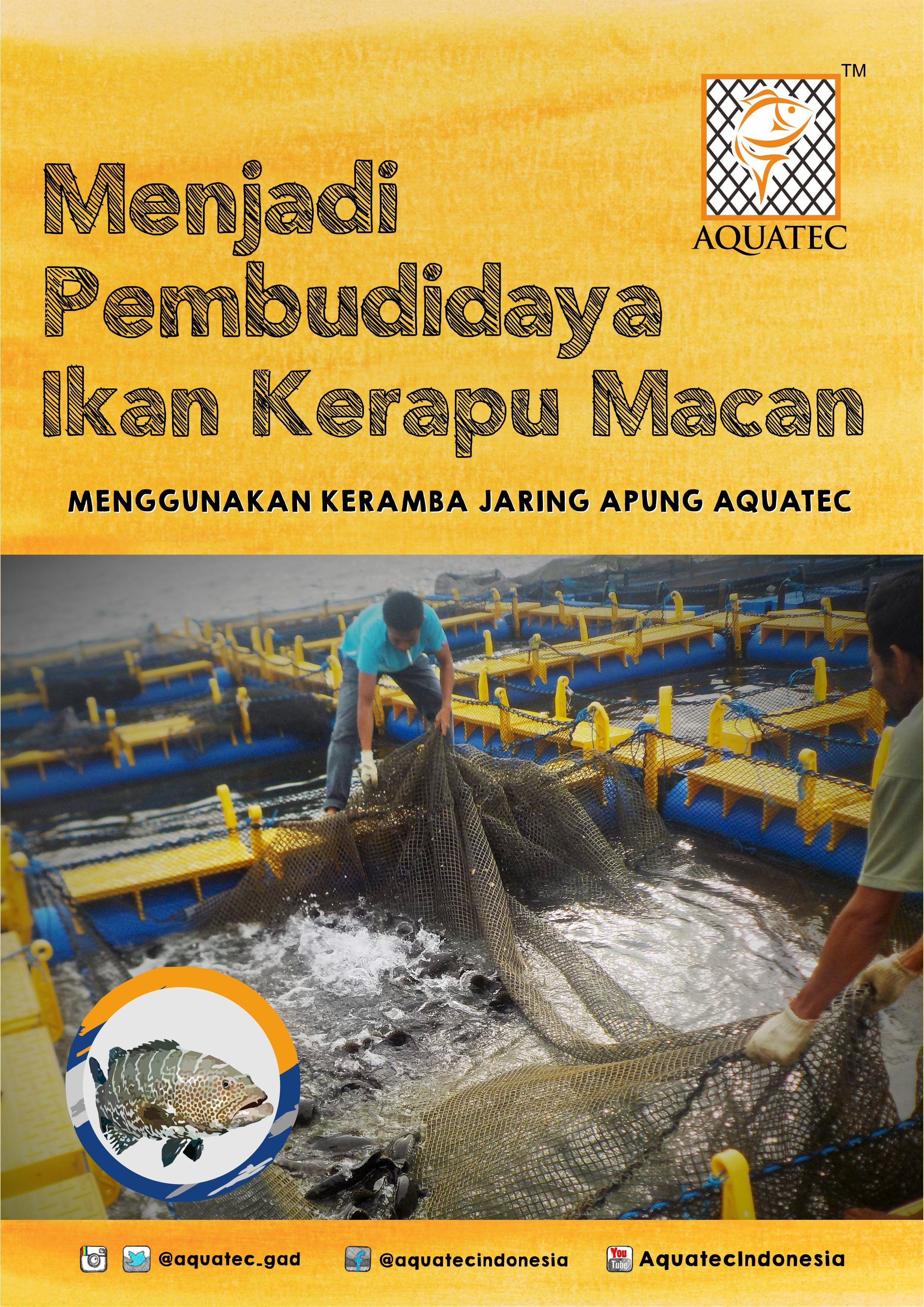 Menjadi Pembudidaya Ikan Kerapu Macan Aquatec Indonesia